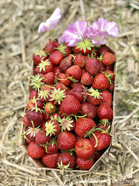 A basket of fresh picked strawberries