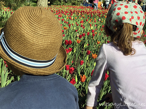 The Tulip Festival in Ottawa